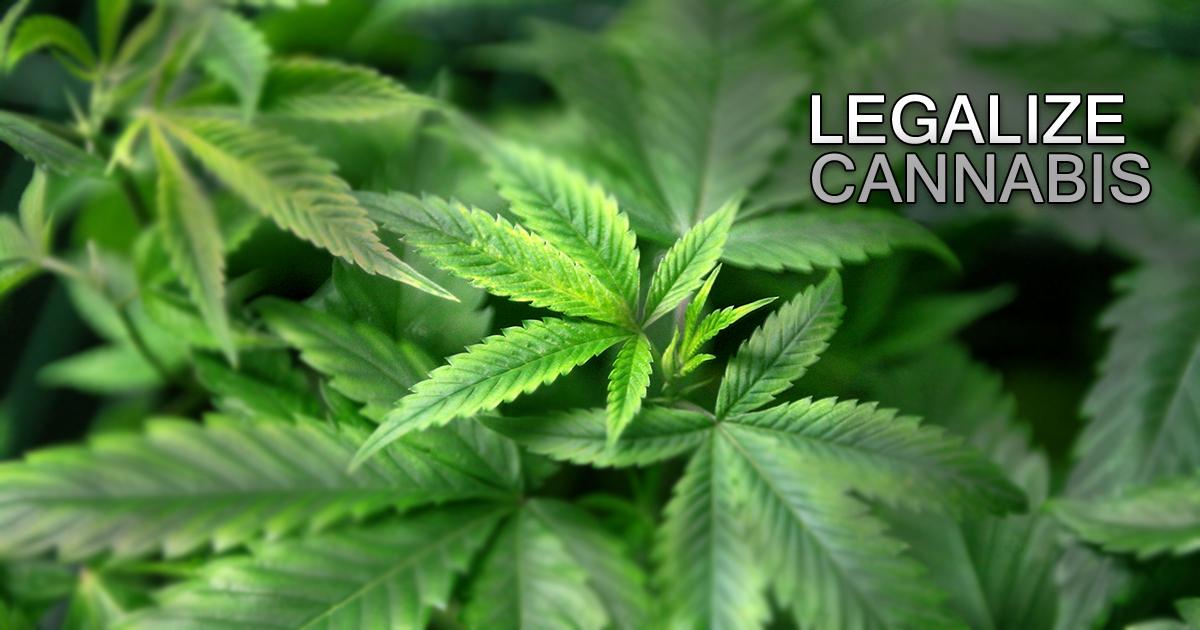 Tra salute, scienza ed economia. Ecco i 7 vantaggi per dire sì alla legalizzazione della cannabis