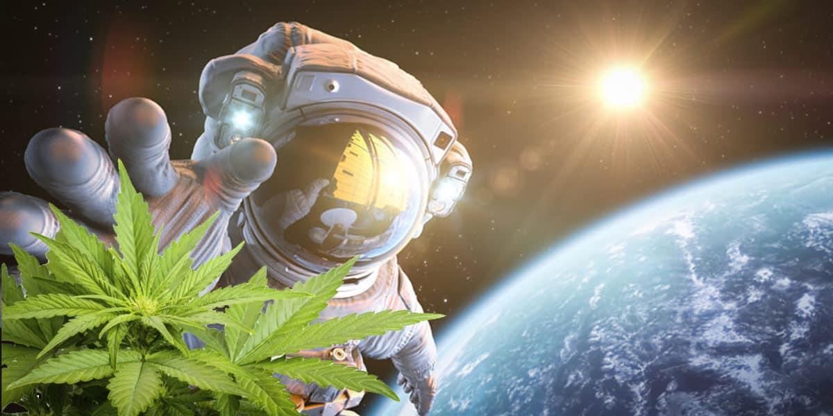 Oltre l'atmosfera per la ricerca medica: la Canapa va nello spazio