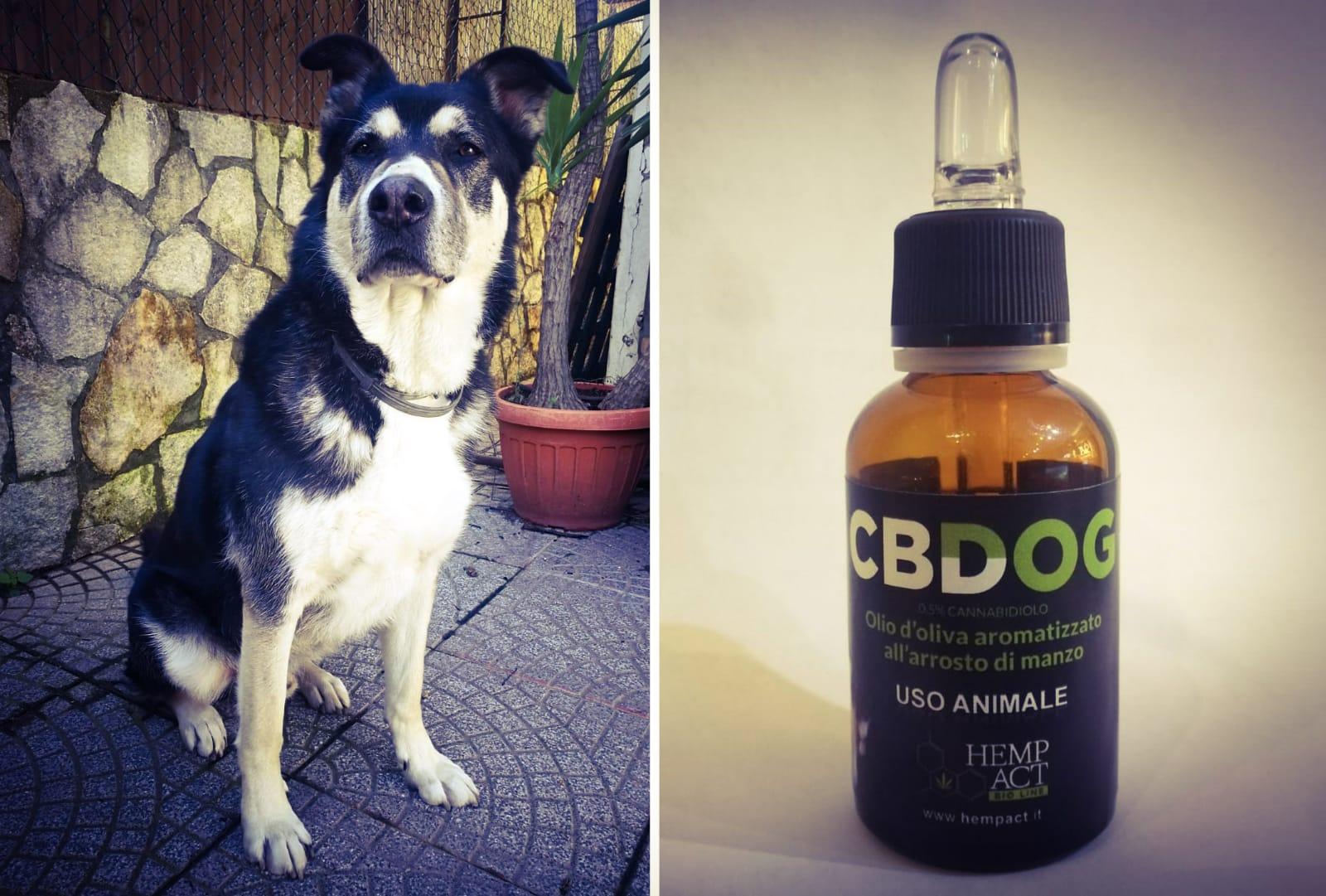 CBDOG, l'unico integratore alimentare al CBD per la salute dei tuoi animali