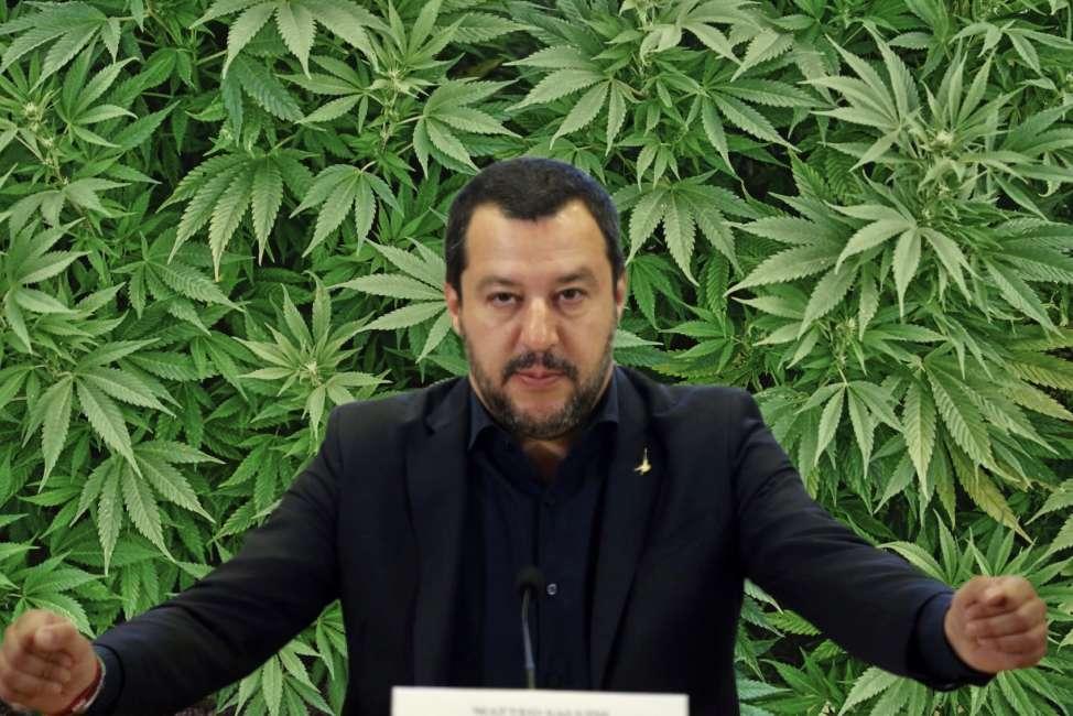 Matteo Salvini contro la canapa, ecco perché proteggere l'industria canapiera è fondamentale