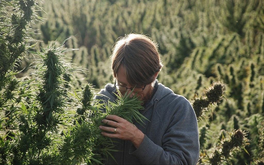 Nuovo cannabinoide 33 volte più efficace del THC, la scoperta è italiana